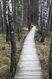 Path in a swamp. Wooden path in a swamp Royalty Free Stock Photo