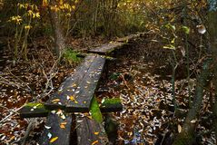 Path in the swamp. A wooden path in the swamp Stock Photo
