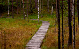 Path in the swamp. A wooden path in the swamp leading to forest Royalty Free Stock Photo