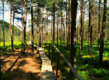 Path in a swamp. A wooden path in the swamp in a sunny day Stock Photo