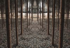 Path of symmetrical trees stock photography