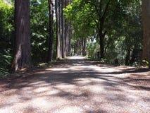 The path less taken Royalty Free Stock Photo