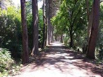The path less taken Stock Photo