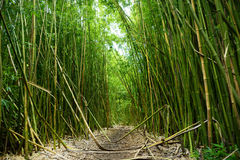 Path through a tall bamboo forrest on the Road to Hana on Maui, Hawaii Stock Photos