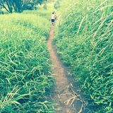 Path through tall grasses, Maui, Hawaii Royalty Free Stock Photo