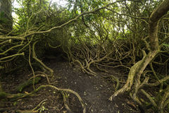 Path through the tangle trees Stock Photography
