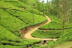 Path in tea plantation Royalty Free Stock Photos