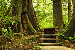 Path in temperate rainforest Stock Photos