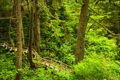 Path in temperate rainforest Royalty Free Stock Photos