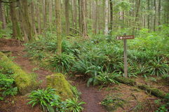 Path in temperate rainforest Royalty Free Stock Images