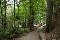 Path in the thick green rainforest, West Vancouver, stock photo
