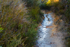Path in thick shrubbery in the Australian bush Royalty Free Stock Photos