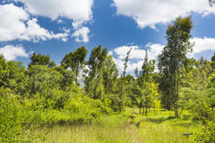 Path thorugh Karura Forest in Nairobi, Kenya Stock Photography