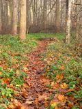 Path though the autumn wood Stock Image