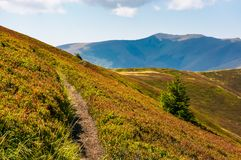 Path though mountain hills and ridge. Beautiful scenery with spruce tree on a slope in fine weather on late summer day Stock Photo