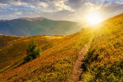 Path though mountain hills and ridge at sunset. Beautiful scenery with spruce tree on a slope in fine weather on late summer day Stock Photography
