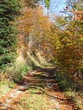 Path though woods in autumn Royalty Free Stock Photo