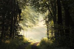 Free Path Through A Misty Spring Forest During Sunrise Country Road Deciduous At Morning Fog Surrounds The Trees Illuminated By Rays Of Stock Photography - 139301542