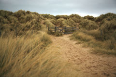 Path throught the sand dunes Royalty Free Stock Photos