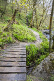 Path throught the woods Royalty Free Stock Images