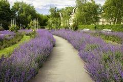 Path throw the purple park. Path in the purple greeen park stock photos