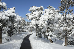 Path thru the woods Stock Photo