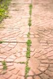Path from tiles with a grass Royalty Free Stock Photography