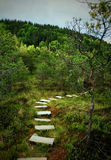 Path in the  Tinovul Mohos Royalty Free Stock Image