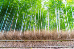 Path to bamboo forest at Arashiyama in Kyoto. Path to bamboo forest at Arashiyama in Kyoto, Japan Royalty Free Stock Photos