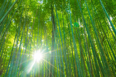 Path to bamboo forest at Arashiyama in Kyoto. Path to bamboo forest at Arashiyama in Kyoto, Japan with sunflare Royalty Free Stock Image