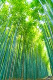 Path to bamboo forest at Arashiyama in Kyoto. Path to bamboo forest at Arashiyama in Kyoto, Japan Stock Images