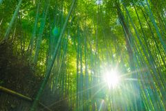 Path to bamboo forest at Arashiyama in Kyoto. Path to bamboo forest at Arashiyama in Kyoto, Japan with sunflare Royalty Free Stock Photos