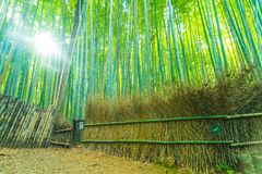 Path to bamboo forest at Arashiyama in Kyoto. Path to bamboo forest at Arashiyama in Kyoto, Japan with sunflare Stock Photography
