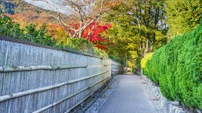 The Path to Bamboo Grov at Arashiyama in Kyoto. The Path to Chikurin-no-Michi (Bamboo Grove) at Arashiyama in Kyoto Stock Photos