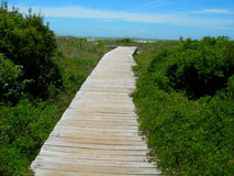 Path to beach. In south carolina Royalty Free Stock Image