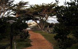 Path to the Beach from Asilomar Conference Center Stock Photo
