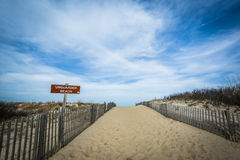 Path to the beach at Cape Henlopen State Park, in Rehoboth Beach Stock Images