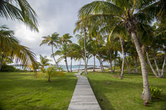 Path to beach through coconut palm trees Royalty Free Stock Photography