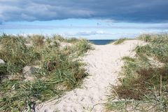 Path to beach in Denmark stock image