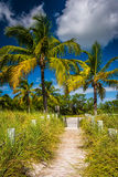 Path to the beach and palm trees at Smathers Beach, Key West, Fl Stock Photography