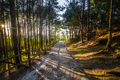 Path to the beach. Sand path to the beach Royalty Free Stock Photo