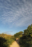 Path to beach. Sandy, bushy path to beach with whispy clouds in blue sky Stock Images