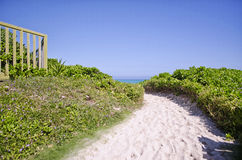 Path to the Beach. Sandy path through vegetation to the beach Royalty Free Stock Photography