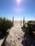 Path to Beach. View of beach path, Ocean City New Jersey Sun rays and scrub pines stock photos