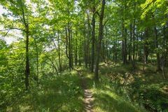Path in to the Bruce Trails Split Rock Narrows royalty free stock photo