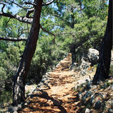 Path to the Cape Gelidonya. Pine-trees. Aged photo. Path to the Cape Gelidonya. Trekking in Turkey. Lycian Way Walking. Pine-trees. Aged photo. Walkway through Royalty Free Stock Photos