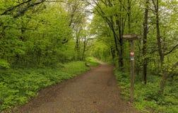 The path to the castle of Liechtenstein in Vienna.Vienna woods Stock Image
