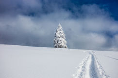Path to christmas tree in winter Stock Photo