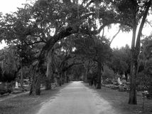 Path to the Dead. Main path of Boneventure Cemetary in Savannah Georgia Stock Images