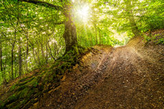 Path in to deep ancient forest Stock Image